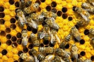 бизнес план по пчеловодству образец